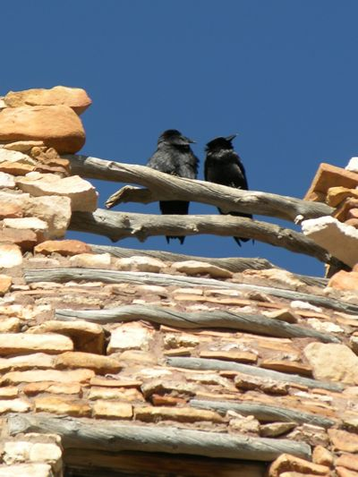 two ravens on Watchtower.jpg