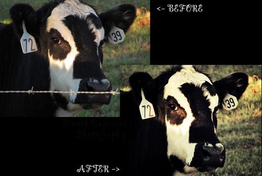 cow edit