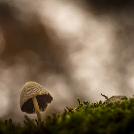 Mushroom in the Bokeh by Gabriele Venturini - Nature Up Close Mushrooms & Fungi ( mushroom, marsia, moss, forest, bokeh, mushrooms )