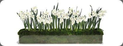 paperwhites_1_700x700 floral art