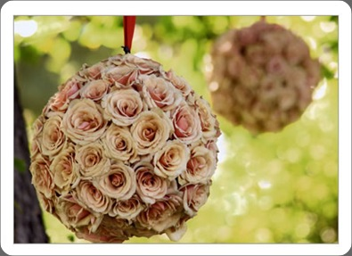 rose_sphere_close camilla flowers