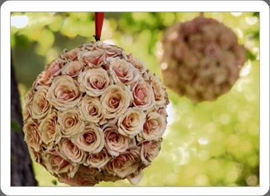 rose_sphere_close camilla flowers