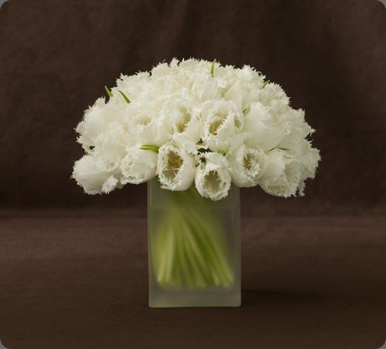 Pure_3_LL belle fleur