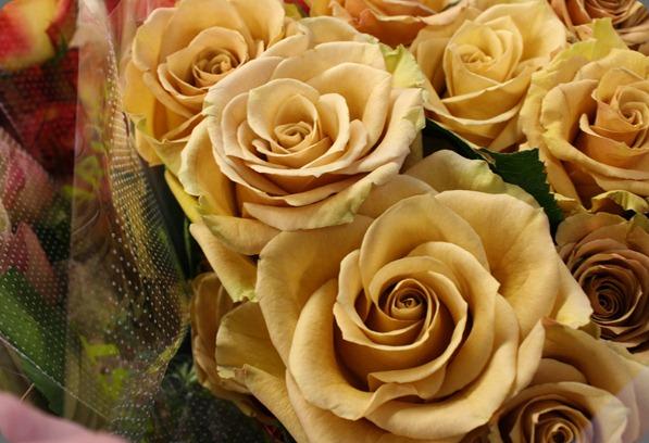 combo rose  Harvest via Flirty Fleurs