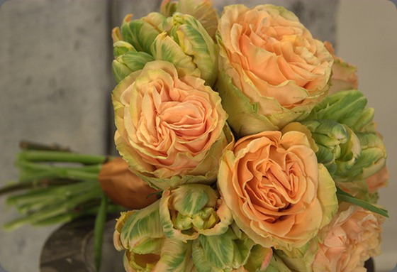 5521173519_f741c08e22 peach parrot tulips and peach finess roses garden party flowers