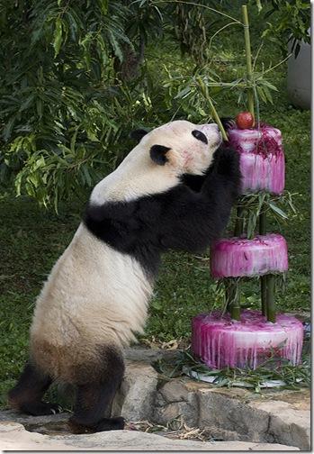 Panda_Birthday3