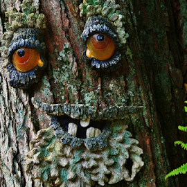 Face on tree by Dave Martin - Nature Up Close Trees & Bushes ( face on tree )