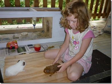25 guinea pigs