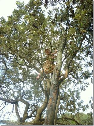 78 treeclimbing