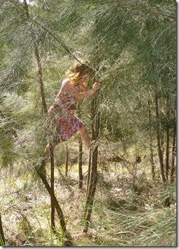 100 tree climbing