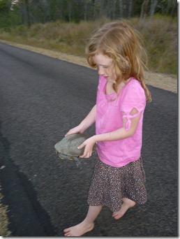 02 turtle rescue