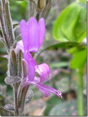 56 spring flowers