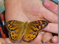 077 butterfly