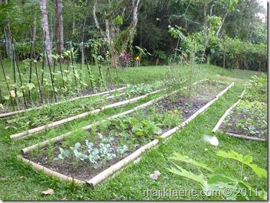 16 veg garden