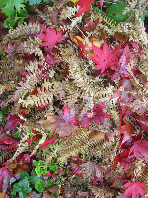 Maidenhair Fern and J.Maple Bloodgood