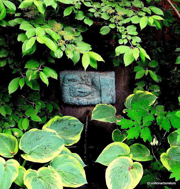 Fountain with Dreaming Girl plaque, Celandine Major pods, Hosta