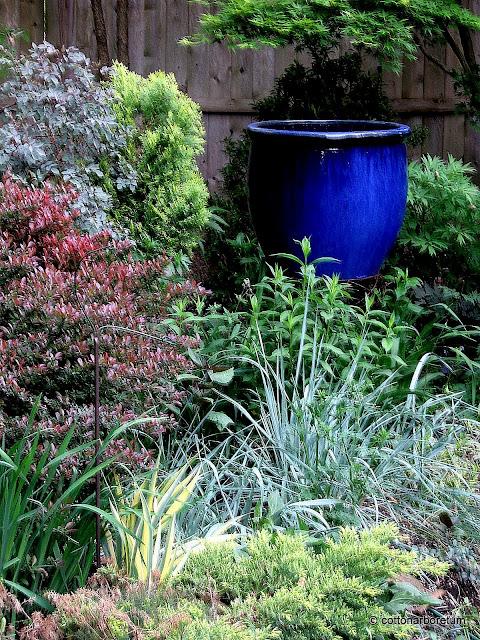 Berberis Ruby Glow, Rosa glauca, Thuja Beekman's,Iris pallida aureomarginata, Blue lymus, Juniper, tree peony Banquet, Acer palmatum Tobiosho