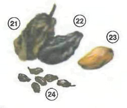Dried%20Fruits <!  :en  >Fruits<!  :  > things english through pictures english through pictures