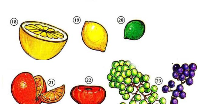 FRUITS 4 Fruits things english through pictures english through pictures