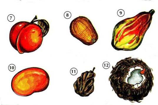 FRUITS 2 <!  :en  >Fruits<!  :  > things english through pictures english through pictures