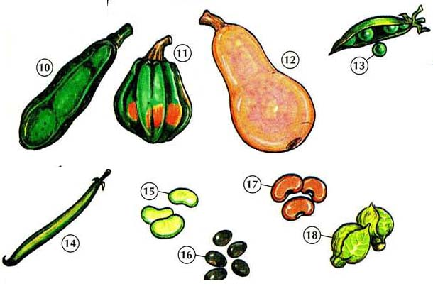 VEGETABLES 2 <!  :en  >Vegetables<!  :  > food 