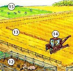12. pigpen/pigsty 13. field 14. combine 15. pasture