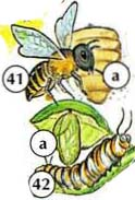 40. tick 41. bee a. beehive 42. caterpillar a. cocoon