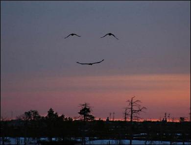 o sorriso do acaso