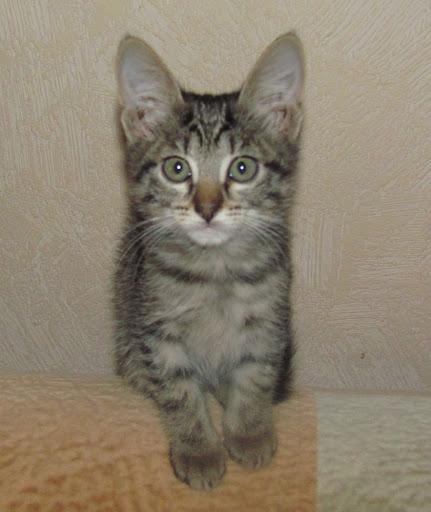 котенок 1