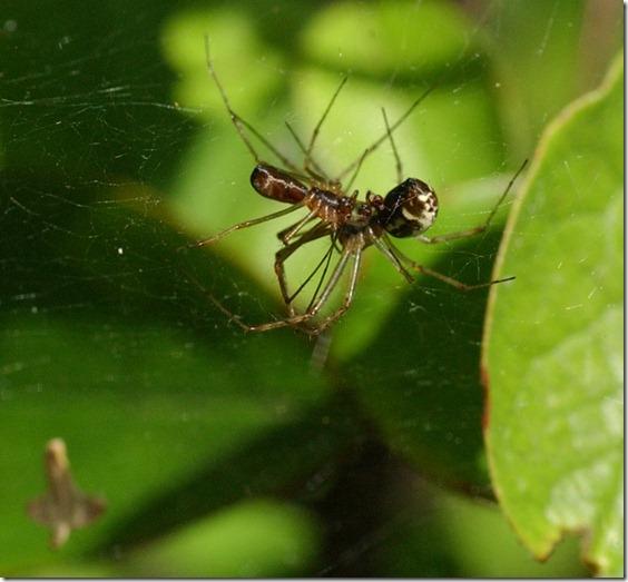 hämähäkit 010