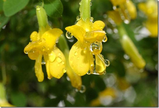 15.6 sade kukka 003