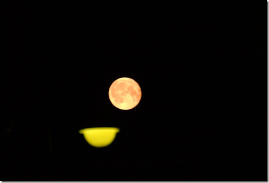 kuu 019