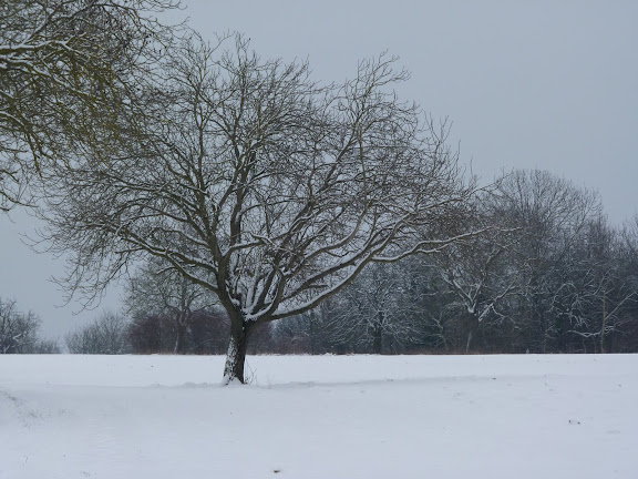 Quel mode, photos sous la neige P1000649