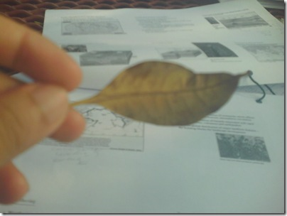 lil' leaf fell on my notes