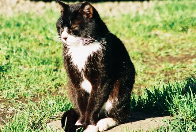 Injured Big Cat Behavior
