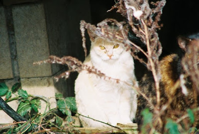 Cat picture feral photo of the day, Hidden Cat