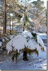 SnowyPalmetto2
