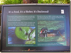 Duckweed Sign