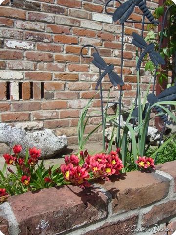 mom's garden 057
