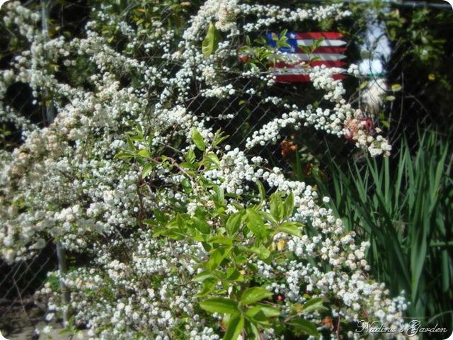 mom's garden 044