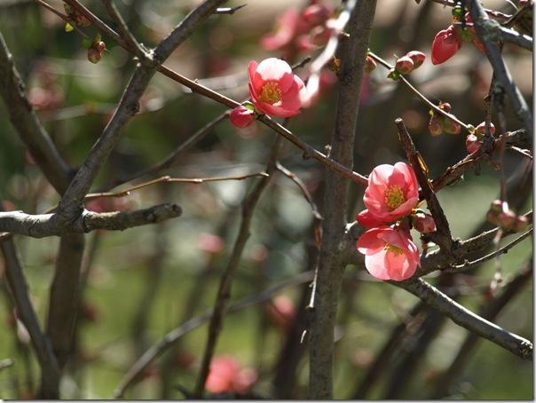 Primeras flores de arbustos.