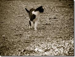 La Misi acechando. Increible esta gata.