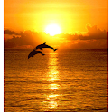 Dolphins in Sunset Wallpaper icon