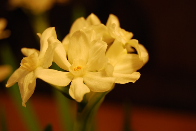 Paperwhites without flash