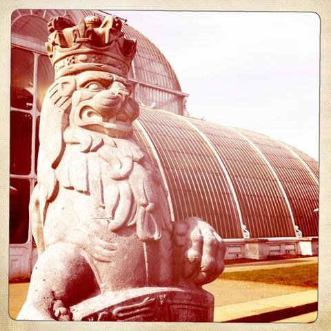 March - a lion (2)