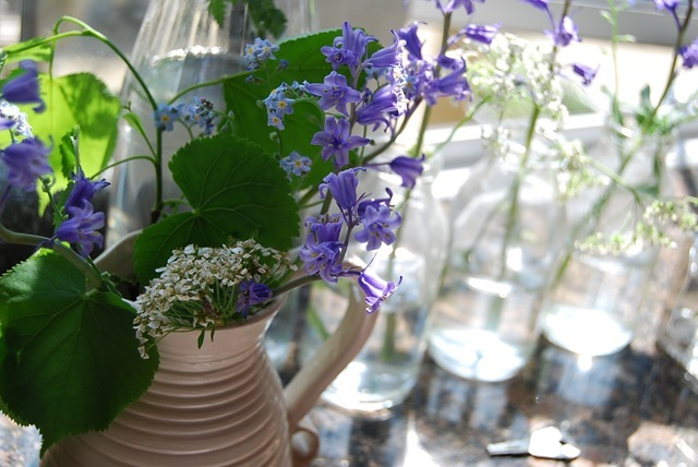 Bluebells on my windowsill