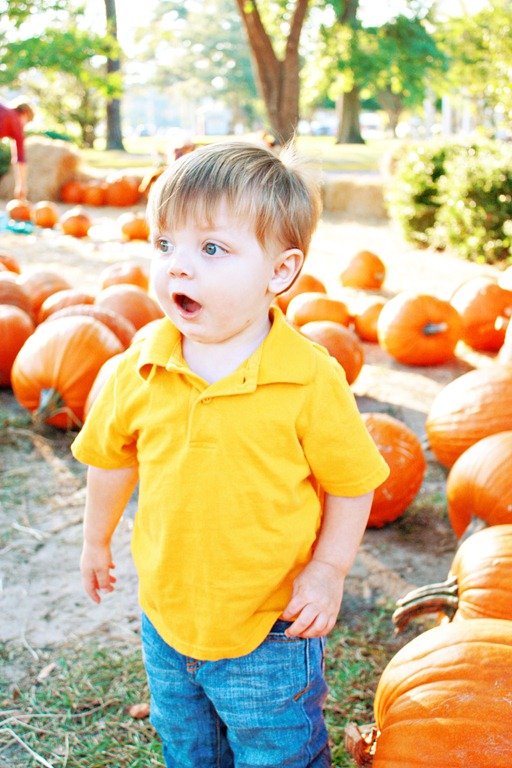 PumpkinPatch 072
