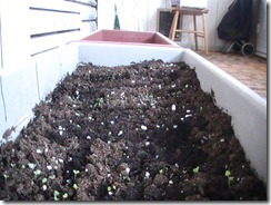 Planter Boxes April 8_1