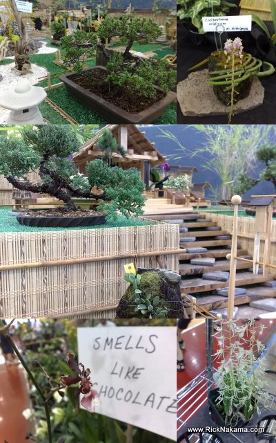 www.RickNakama.com Kalani High School Orchid & Bonsai Show