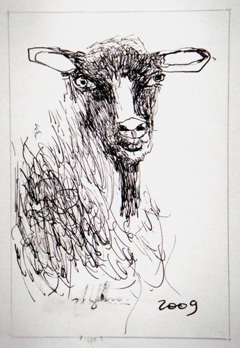 Goat Nr32